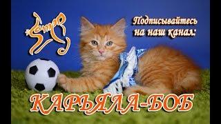 Порода кошек КАРЕЛЬСКИЙ БОБТЕЙЛ трейлер канала КАРЬЯЛА-БОБ