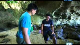 The search for the anti-venin in Masbate | Born to be Wild