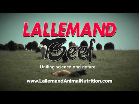 DocTalk - Mycotoxins in Animal Feed 1080p