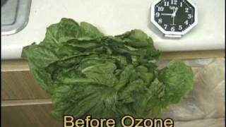 How Lettuce reacts to being washed in Ozonated water.