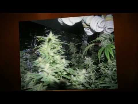 how to grow pot without getting caught indoor growing cfl grow lights youtube