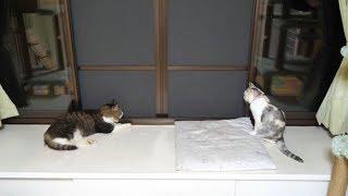 2匹の猫と2匹のカナブン thumbnail