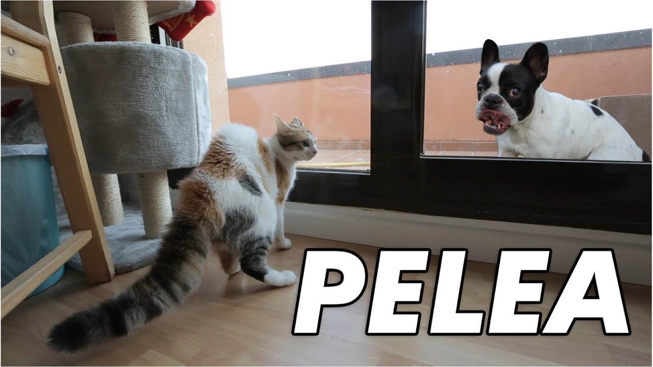 como-reacciona-un-gato-pequeo-al-ver-a-un-perro-por-primera-vez-salva