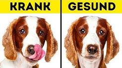 10 Warnzeichen, dass dein Haustier um Hilfe schreit