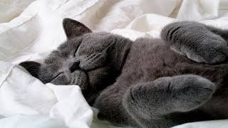 Funny Cats Sleeping - Funny Cute Cats Compilation - Sleeping Cats Part 3