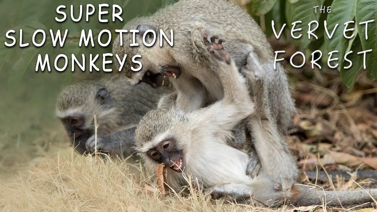 Super funny monkeys