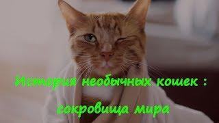 ИСТОРИЯ НЕОБЫЧНЫХ КОШЕК  СОКРОВИЩА МИРА  THE HISTORY OF AN UNUSUAL CAT