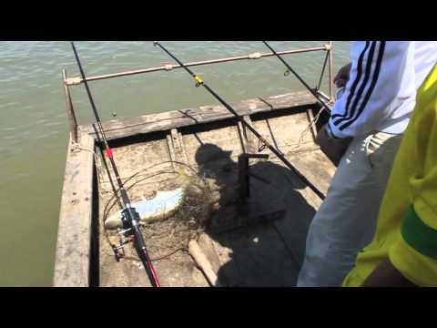 Chú Lập Câu Cá Bông lau