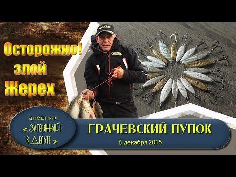 Рыбалка в Астрахани. На что ловить жереха осенью.