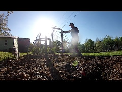Broadcast Seeding Okra, Squash and Melons - No-Till Agriculture