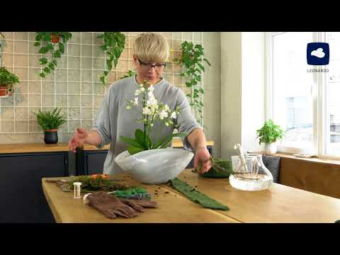 diy---orchideen-effektvoll-dekorieren-|-leonardo