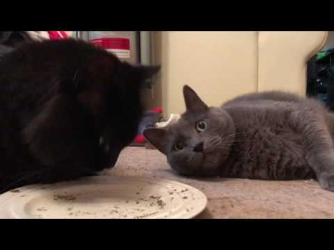 Stoned cats scared by fart