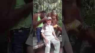 Прикол про обезьян!('_')