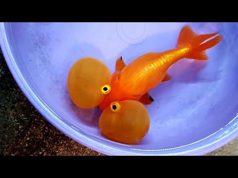 Man-Made Fish – Love 'Em or Hate 'Em?