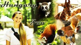 Путешествие по Венгрии: Зоопарк(Добрый вечер! Сегодня мы продолжим путешествовать по Венгрии и поедем в отличный зоопарк в городе Ниредьха..., 2014-09-10T20:15:44.000Z)