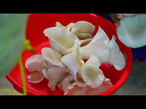 FIB NOORUMENI 507   Mushroom Cultivation A Success Story
