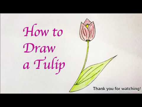 How To Draw A Tulip For Kids