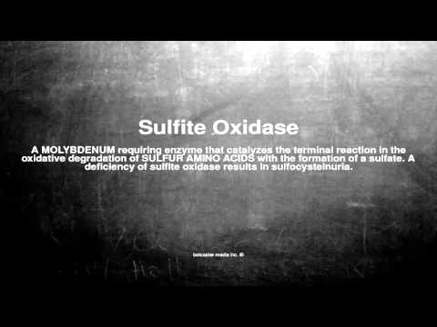 Medical vocabulary: What does Sulfite Oxidase mean