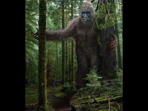 World Bigfoot Radio #48 ~ Skalkaho Giants!/Richard Williams.