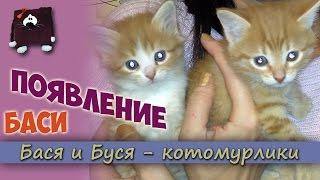 Появление Баси. Двое котят в семье. Как вырастить котят?