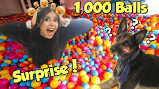Surprising My DOG with 1,000 Colourfull Balls!! 😱 *Hilarious Reaction*