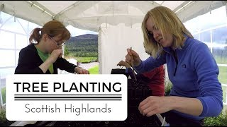 Conservation Matters | Restoring the Caledonian Forest