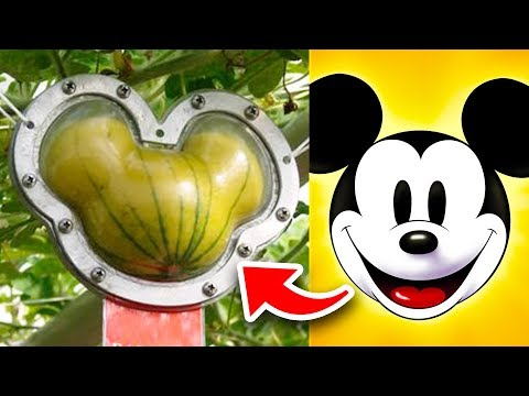 10 Disney World Food Facts Disney Will NEVER TELL YOU (Part 2)