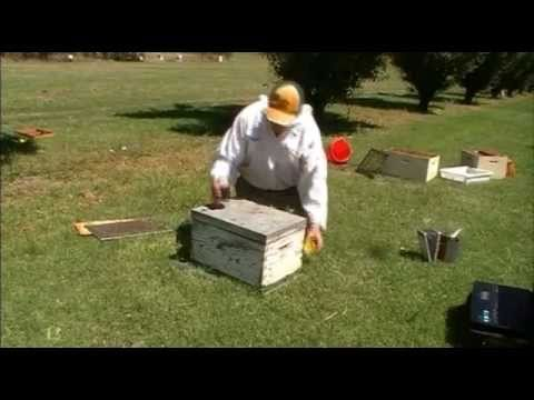 Destroying bee colonies with petrol