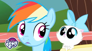 'The Pet Song' Music Video 🐶 MLP: Friendship is Magic 🎶 #MusicMonday