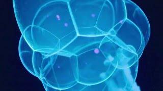 Шоу мыльных пузырей. Ультрафиолет. Неон.(, 2016-03-23T17:59:48.000Z)