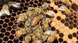 New Queen Bee Installation & Results