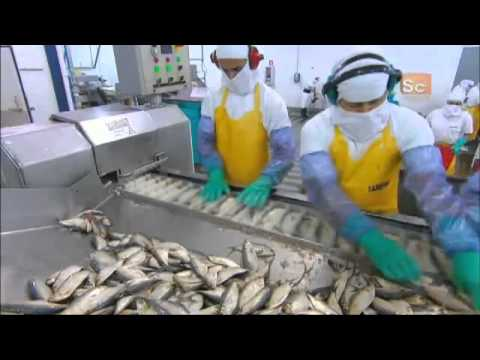 How It's Made -  Canned Sardines