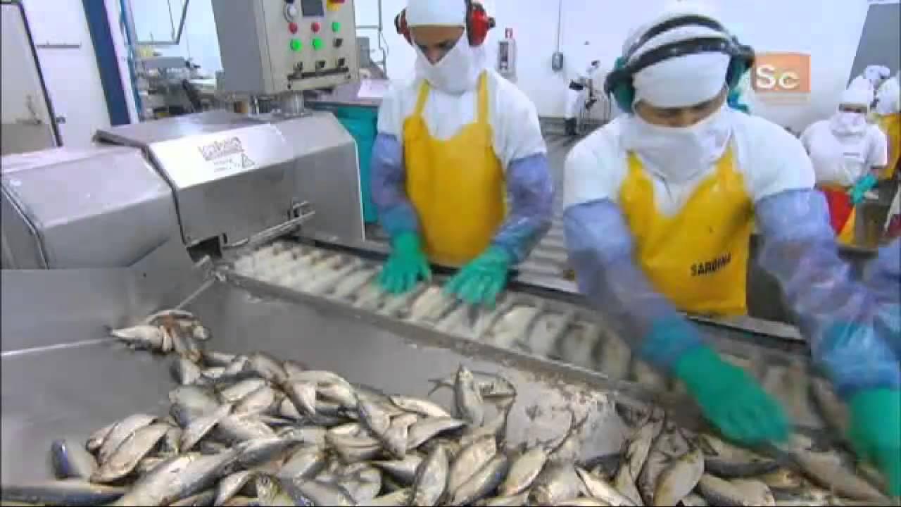 Hasil gambar untuk sardines canning process