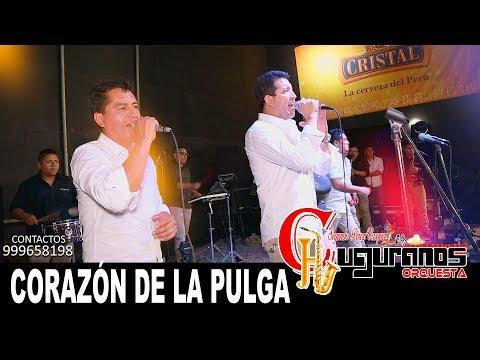 Corazón de la Pulga / Los Chuguranos Orquesta / Primicia  2018 Concierto Est. Musga 4K