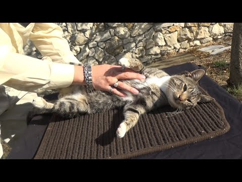 My Cat Massage | Simple Pet Relaxing Therapy