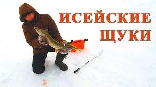 Ловим Щуку в Заповеднике Зимняя рыбалка на озере Исей