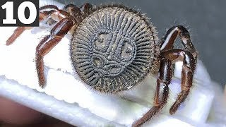 10 Most Rare and Deadly Spiders