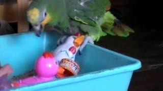 Курсы молодых матерей у попугаев