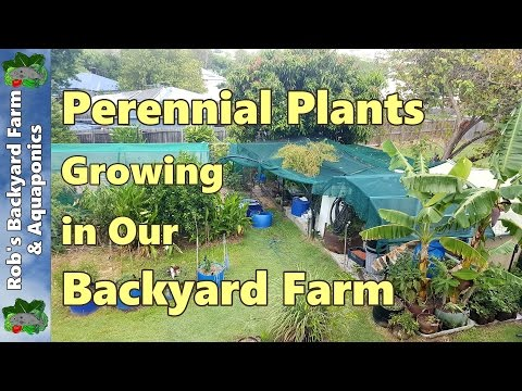 Perennial Plants in our Backyard Farm / Urban Farm