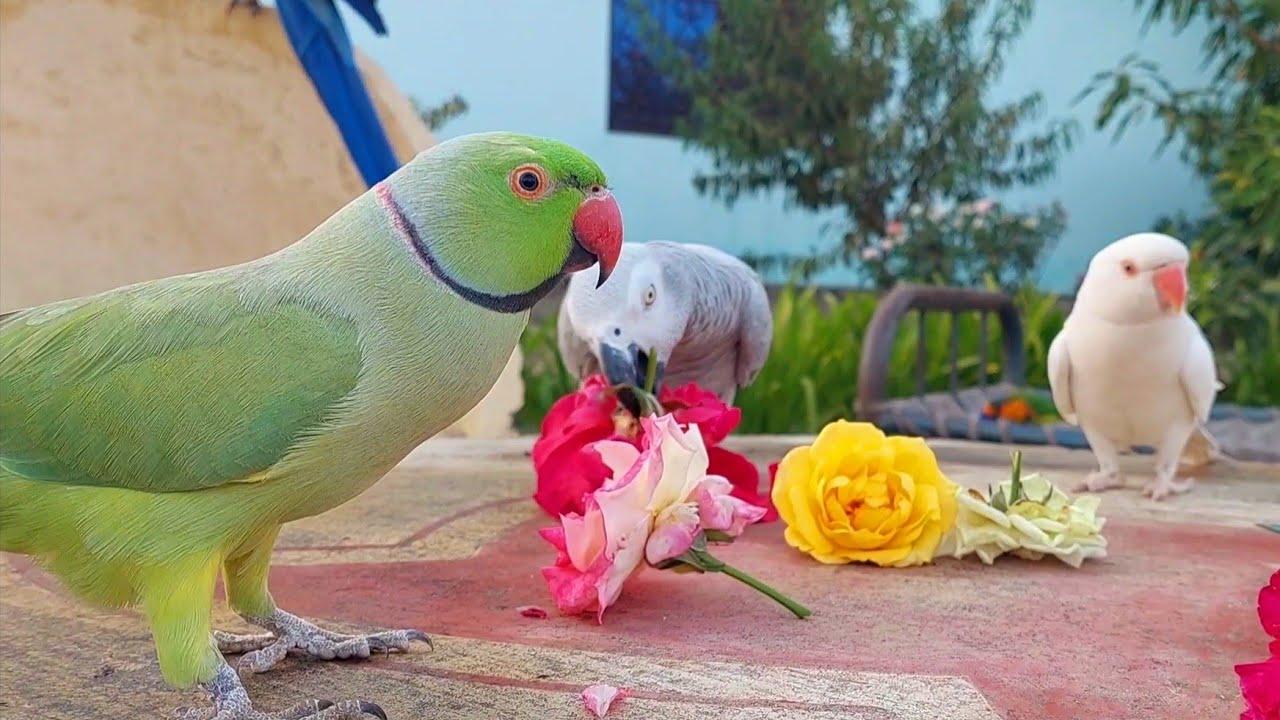 Super Cute and Funny Parrots