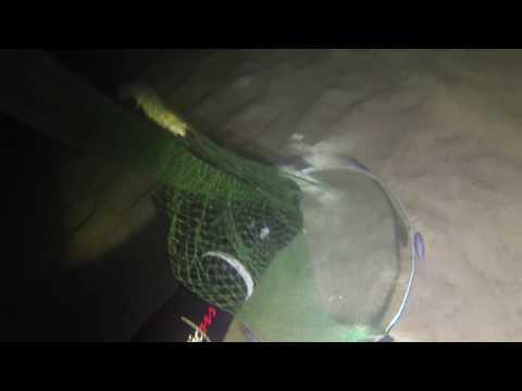 Prawn Diving Swan River