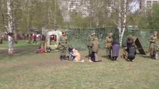 9 мая 2015 Пермь. ПЕРЕДАЧА СОБАК В АРМИЮ ч2