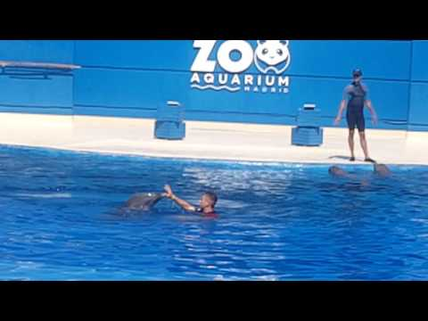 Exhibicion delfines zoo madrid