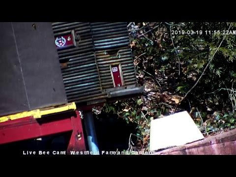 Live Honey Bee CAM - 1080p HD 24/7 Like & Share Us!  Through Awareness - we're saving the bees!