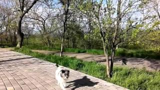 Одесский юмор. Трасса здоровья. Батл собаки & вороны. Odessa. Battle dogs & crows/(Ворон отстаивает свою территорию. Кто победит??? ПОДПИШИСЬ https://www.youtube.com/channel/UCB2LKbWsD8BzvZ1LBeBmGBw ИНТЕРЕСНОЕ ..., 2016-04-22T13:15:17.000Z)