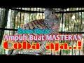 Suara Gacor Cocok Buat Masteran Silahkan Coba  Mp3 - Mp4 Download