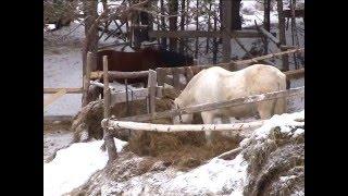 спасли лошадей