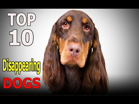 Top 10 disappearing dog breeds | Top 10 animals