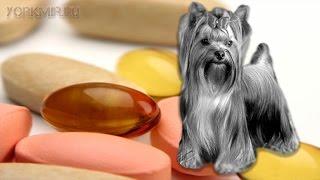 Авитаминоз у собак | Нехватка витаминов | Симптомы.