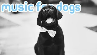 11 HOURS of Relaxing Music for Dogs! Anti Anxiety and Sleep Aid! NEW!